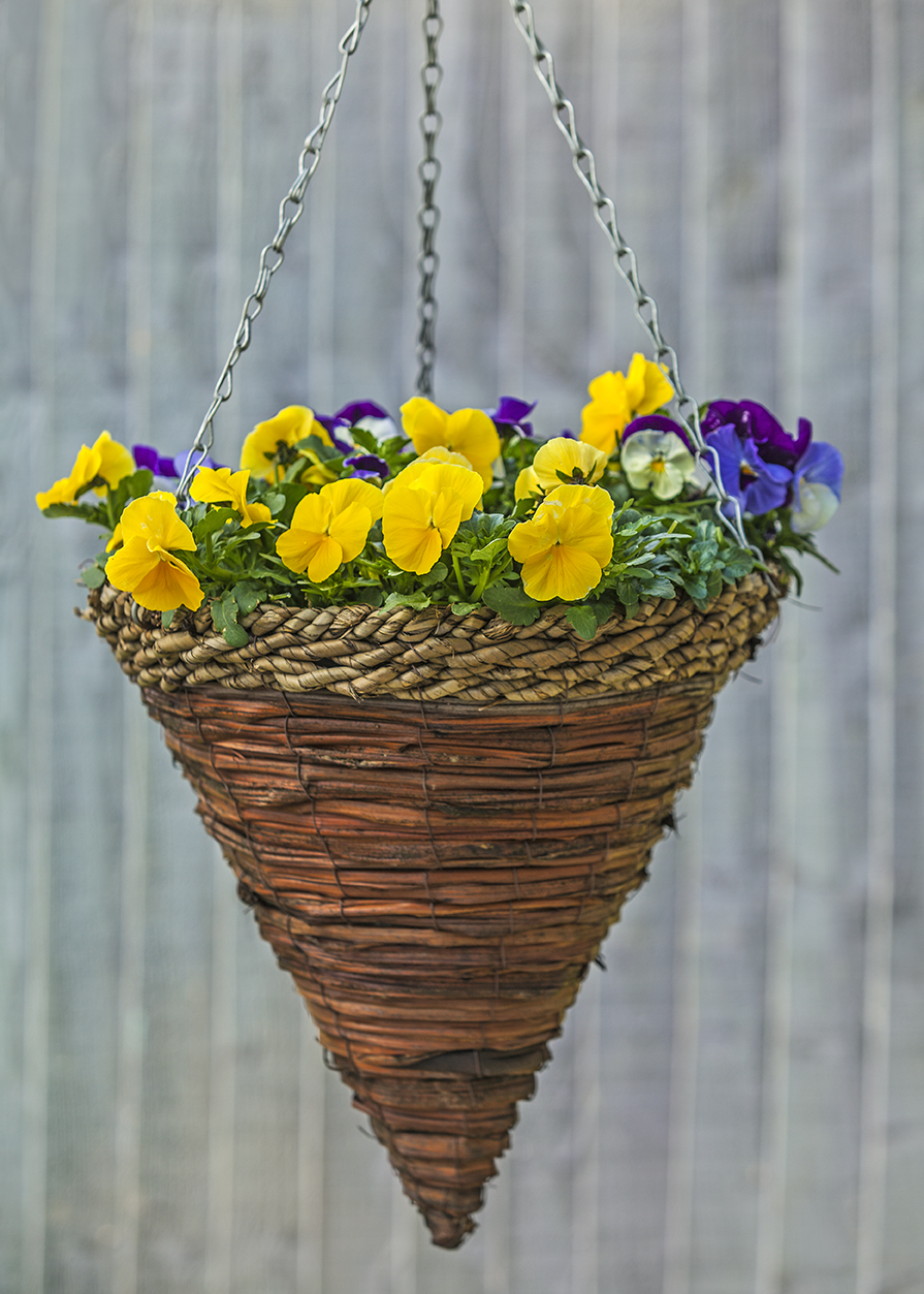 WP16_Pansy_Cool_Wave_DZ1_1104042_MARCH2014.jpg