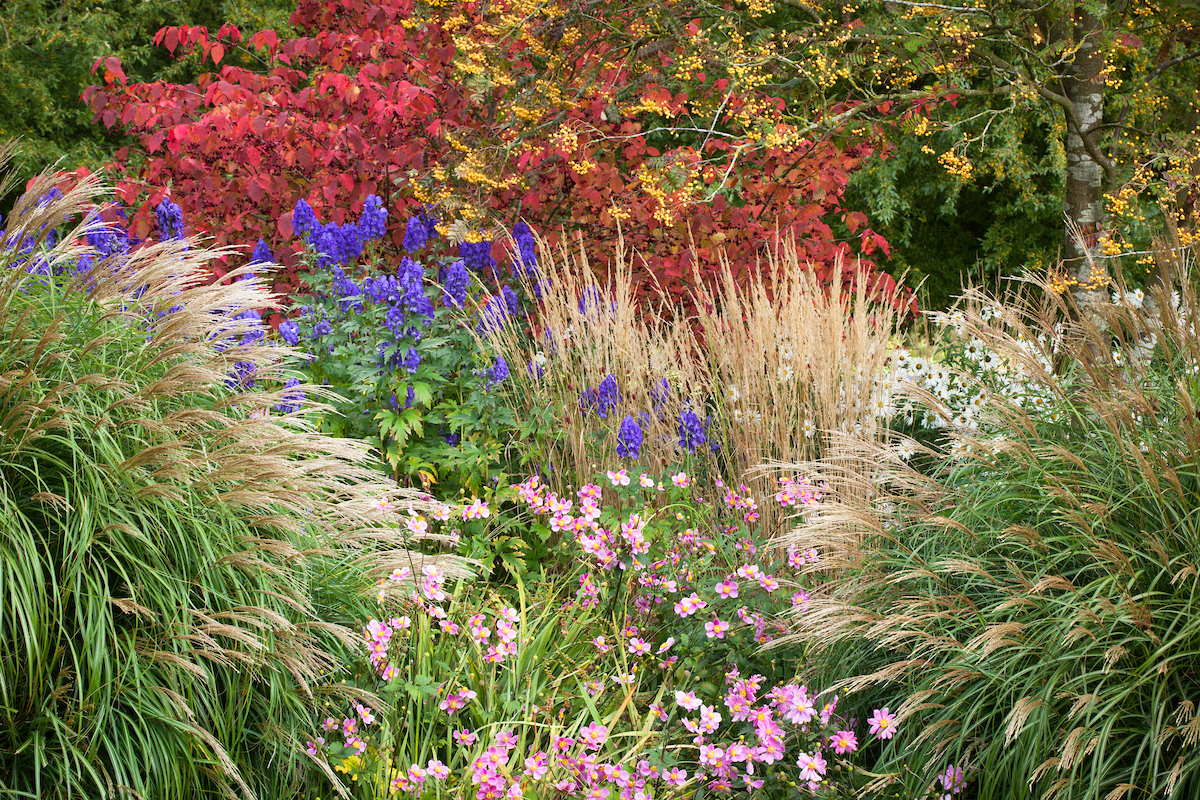 How to prune ornamental grasses which gardening helpdesk for Ornamental grasses that stay green all year