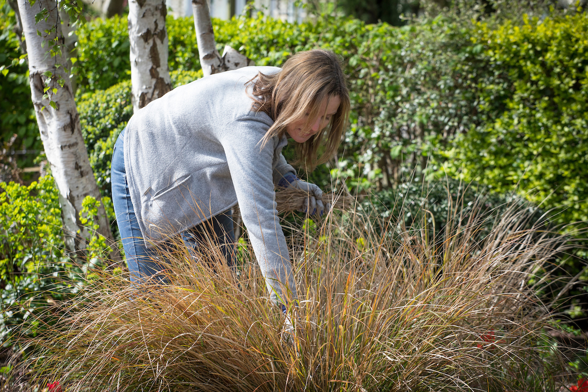 Ornamental Grasses Pruning How to prune ornamental grasses which gardening helpdesk caption comb out the old leaves and seed heads from evergreen grasses workwithnaturefo