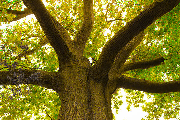 The law on trees which gardening helpdesk for Garden law trees