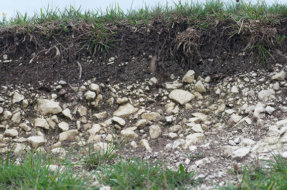 How to succeed on chalky soil which gardening helpdesk for Soil articles
